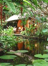 The Watergarden - tropical water garden